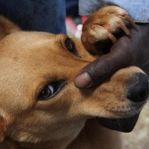 Fear as four rabies cases confirmed in Naivasha