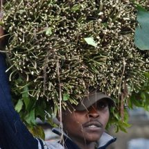 Somali says no to Kenyan Miraa