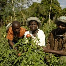 Kenya Farmers to demand Investment in Ecological Farming