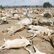 Lamu Muslims in four-day fast and prayers for rain