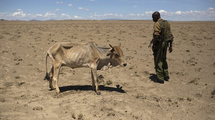 (RNS1-march10) A Kenyan soldier from the Rapid Deployment Unit, an emergency response unit who were deployed due to reoccurring clashes and killings between Turkana and Dhaasanac communities, looks at a cow which is dying from hunger, a few hundred meters from the official boundary of the Kenya-Ethiopia border in northwestern Kenya on October 13, 2013. Photo courtesy of REUTERS/Siegfried Modola *Editors: This photo may only be republished with RNS-KENYA-CATHOLIC, originally transmitted on March 10, 2015.