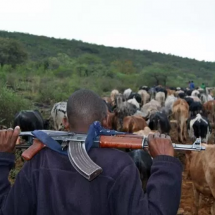 More than 300 illegal herders arrested in Laikipia County