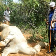 100 camels shot dead by 'security offi cers' in Tana River border feud