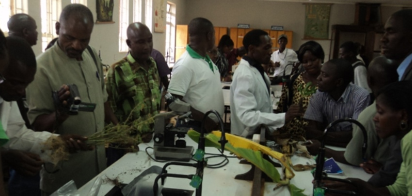 Farmers and Extension Services Providers in  a practical session during Diagnosis and Management of Biotic Stress on Crops Training